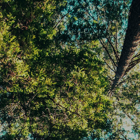 Dalby Firewood