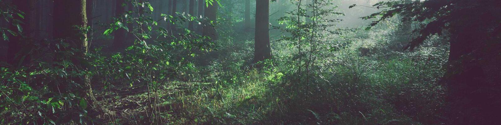 Nutfield Green Park header image